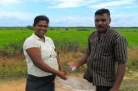 Sri Lankan rice farmers