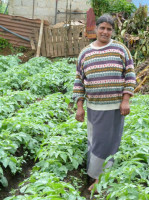 Swarna Hettiarachchi has been a farmer for 35 years and a member of the Women's Coop Ruwaneliya branch since it was first established nine years ago. Her husband and one of her two sons also work on the five-acre family farm, while her other son works on a neighboring farm. They have diversified their crops by cultivating potatoes, carrots, leeks, beets and cabbage. Swarna recently obtained a 100,000 LKR (US$900) loan to expand her potato crop, most of which will be sold as seed to a government potato research center.