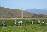 2012_1_24_Farm workers in Vnetura County, CA